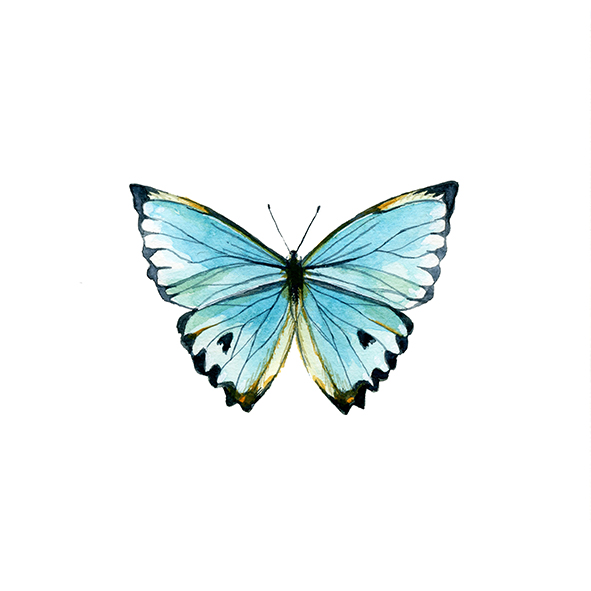 butterfly print by Olivia Linn, watercolor butterfly painting